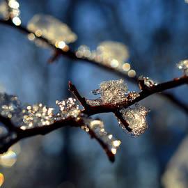 Winter's Jewelry by Dianne Cowen