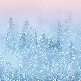 Winter's Magic by Joy McAdams