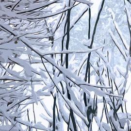 Wintertide by Gina Harrison