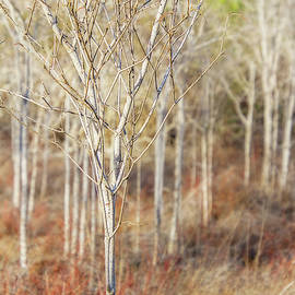 Galapagos Wintry Trees by Terry Davis