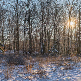 Winter Morning In The Park Lands by Angelo Marcialis