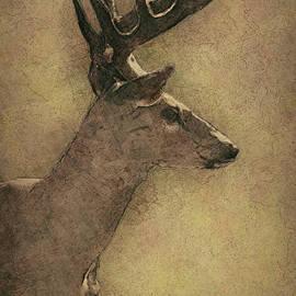 Jack Zulli - Wisconsin White Tail Buck Sketch
