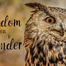 Teresa Wilson - Wisdom Begins in Wonder