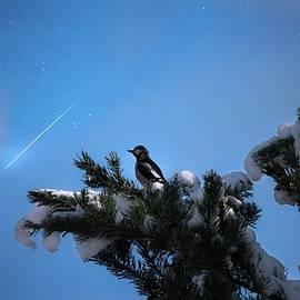 Rose-Marie Karlsen - Wish upon a shooting star