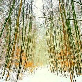 Whispering Winter Woods by Dirk Fecho