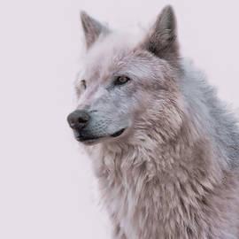 Athena Mckinzie - Wolf Art