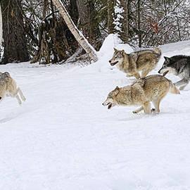 Steve McKinzie - Wolf Chase