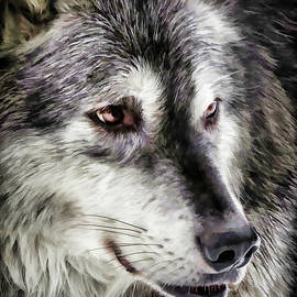 Athena Mckinzie - Wolf Face II