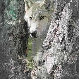 Wolf - Inspirations by Wilko Van de Kamp