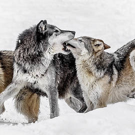 Wes and Dotty Weber - Wolf Kisses