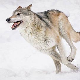 Athena Mckinzie - Wolf On The Run