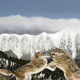 Wildlife Fine Art - Wolf Pack Hierarchy