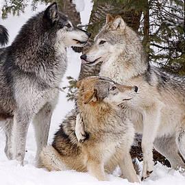 Athena Mckinzie - Wolf Pack Winter