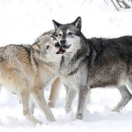 Athena Mckinzie - Wolf Play II