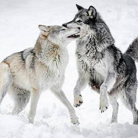 Athena Mckinzie - Wolf Play III