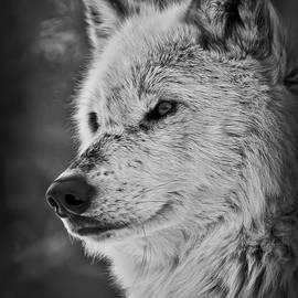 Athena Mckinzie - Wolf Portrait BW