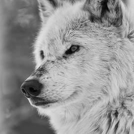 Athena Mckinzie - Wolf Portrait BW II