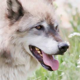 Athena Mckinzie - Wolf Smile