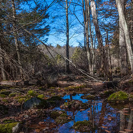 Wompatuck State Park Hiking Reflections by Brian MacLean
