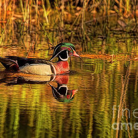 Wood Duck Evening by Deborah Benoit