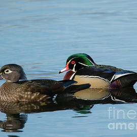 Mike Dawson - Wood Duck Reflections
