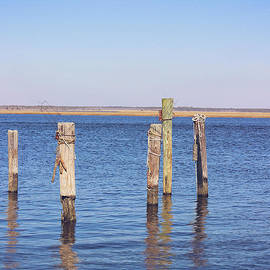 Colleen Kammerer - Wood Pilings on the Mullica River