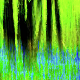 Woodland Abstract Vi by Helen Northcott