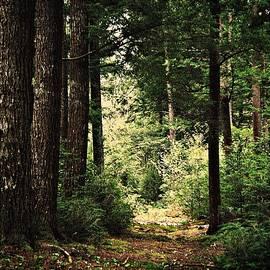 Joy Nichols - Woodland Hush