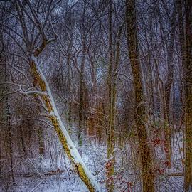 Barry Jones - Woodland Snowfall
