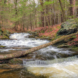 Woodland Waters by Bill Wakeley