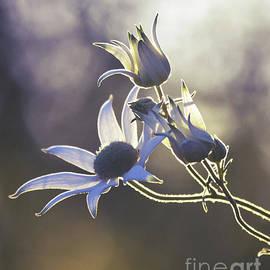 Woodland Wildflowers by Karen Black