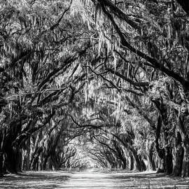 Joan Carroll - Wormsloe Plantation Oaks BW