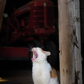 Yawning Barn Cat And Tractor by Dennis Dame