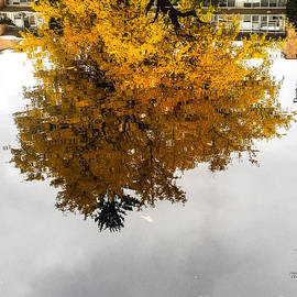 Yellow Art Reflected by Joseph Yarbrough