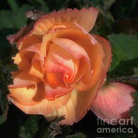Ann Jacobson - Yellow Begonia