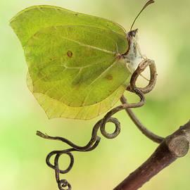 Yellow butterfly on the branch by Jaroslaw Blaminsky
