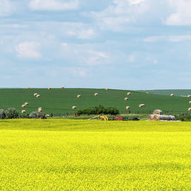 Yellow Canola Field - Vertical by Patti Deters