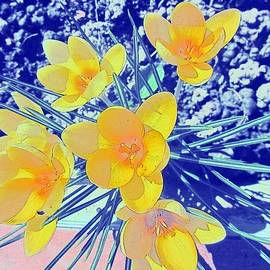 Vesna Martinjak -  Yellow crocuses 2