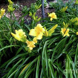 Ruth Housley - Yellow Daylilies 3