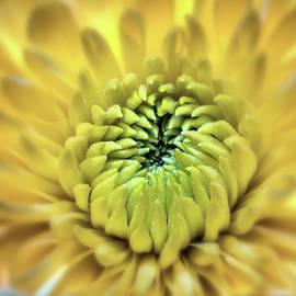 Michael Demagall - Yellow Flower 3