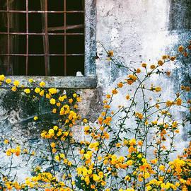 Yellow Flowers And Window by Silvia Ganora
