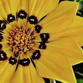 Bruce Bley - Yellow Ganzia