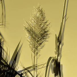 Yellow grass by Damijana Cermelj