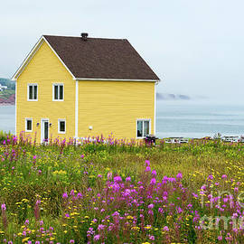 Les Palenik - Yellow House and Fireweed Flowers