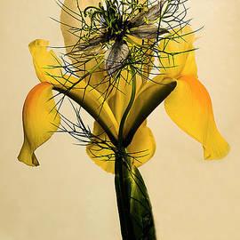 Alexander Vinogradov - YELLOW IRIS FLOWER.