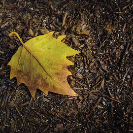 Carlos Caetano - Yellow Leaf