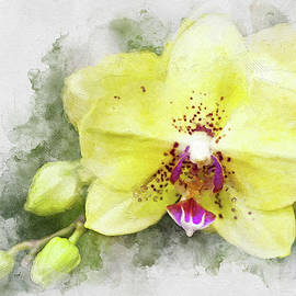 Yellow Phal by Cyndy Doty