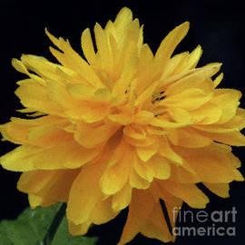 Yellow Pom Pom 4 by Kim Tran