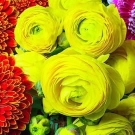 Garry Gay - Yellow Ranunculus And Mums