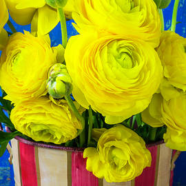 Garry Gay - Yellow Ranunculus In Striped Can